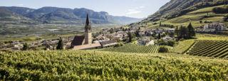 MSc in Wine & Hospitality Management - Webinar 06 February - KEDGE