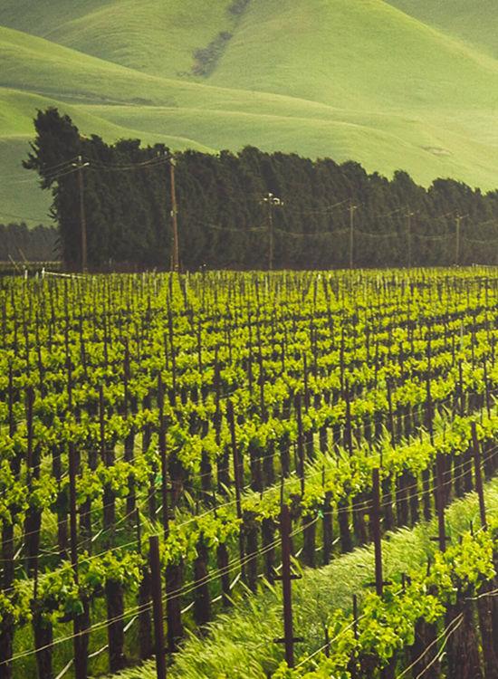 Webinar Wine & Hospitality - KEDGE & EHL - KEDGE