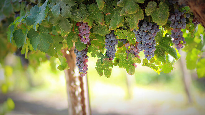 The global market for wine: China leads the emergence of a new world order - KEDGE